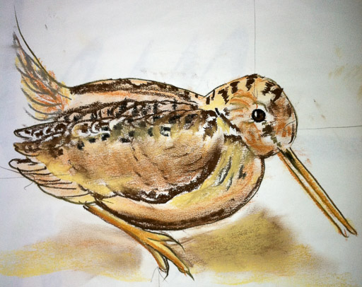 Watercolor sketch of an American Woodcock