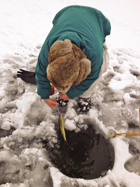 Picture of ice-fisher retrieving a small fish