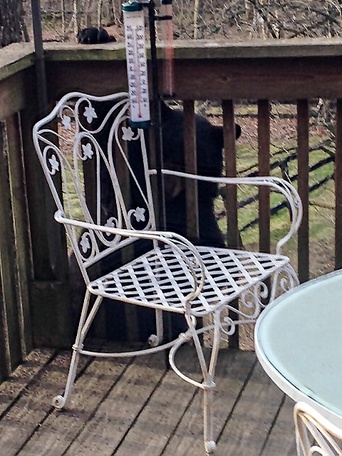 Photo of black bear at the top of a deck support.
