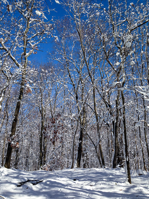 Photo of snow-covered woods and blue sky