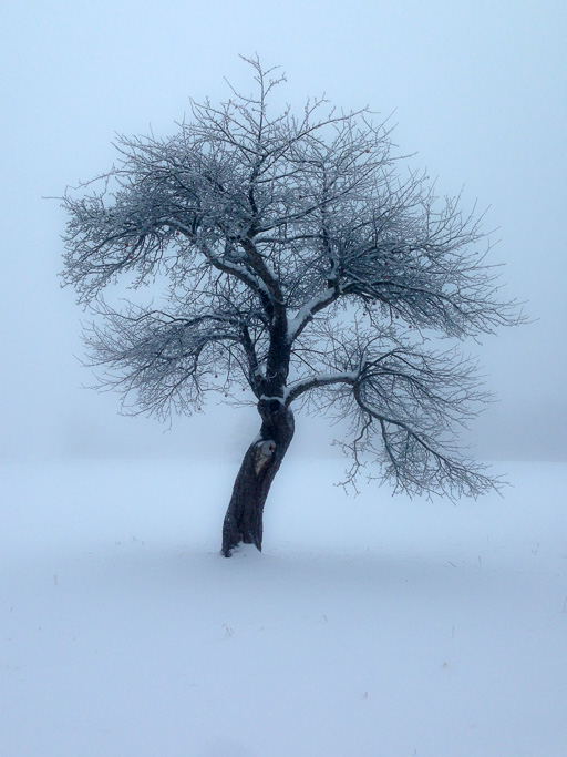 Photo of lone leafless tree in a misty, snow-covered landscape