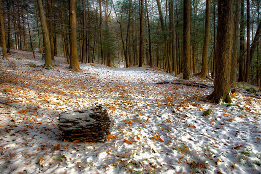 Photo of a lightly snow-covered path through a pine forest