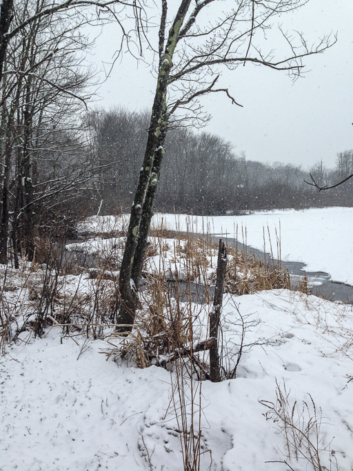Photo of Canopus Lake with snow coming down