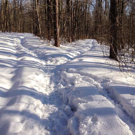 Photo of a snowy fork in a path in the woods