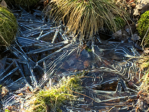 Photo of ice forming between sedge and moss clumps