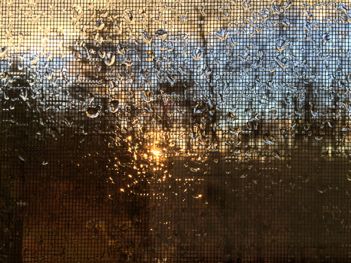 Photo of sunset through rain-drenched screen