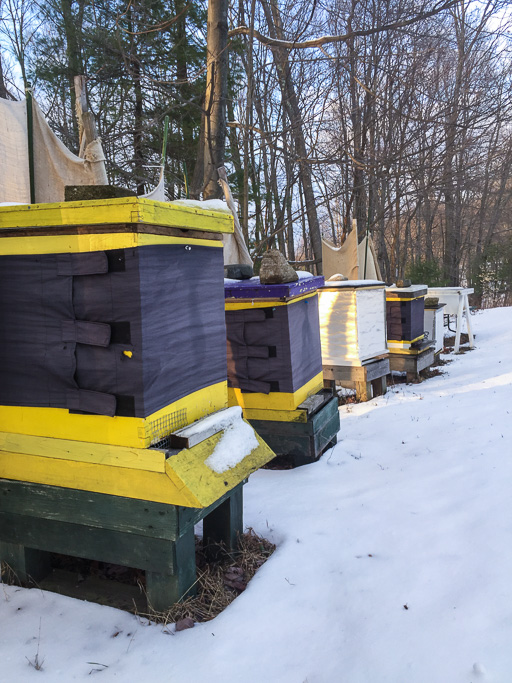 Photo of a row of five beehives in snowy setting