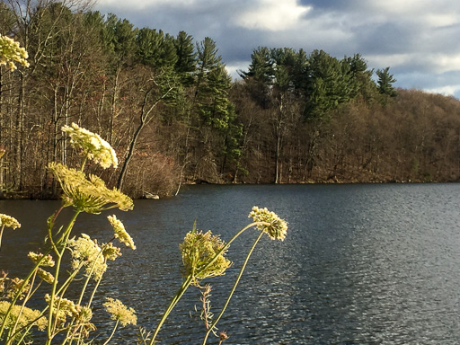 Photo looking across a winter lake with queen Anne's lace in foreground