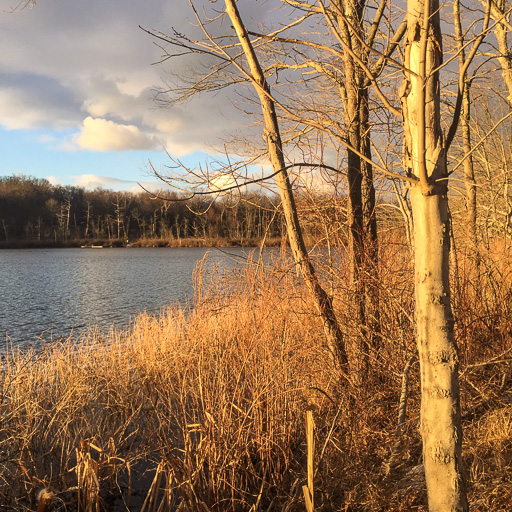 Photo of sunset-lit winter trees at Dean Pond
