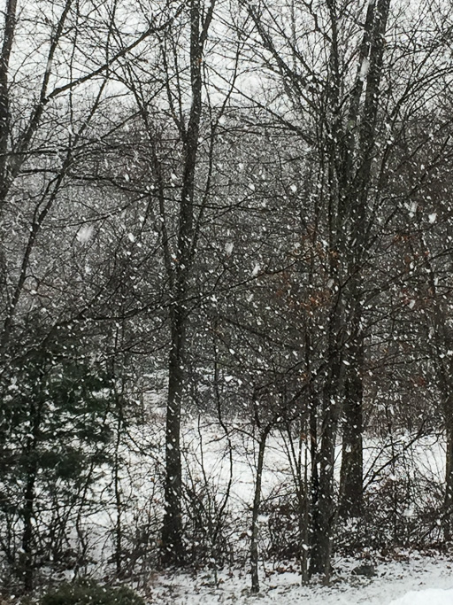 Photo of snow filling the woods