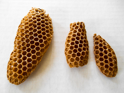 Photo of three newly fashioned honey combs