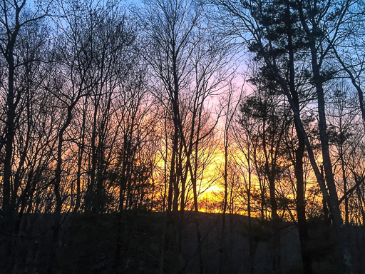 Photo of a spring sunset through leafless trees