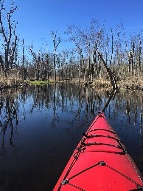 Photo from kayak of The Great Swamp in early spring