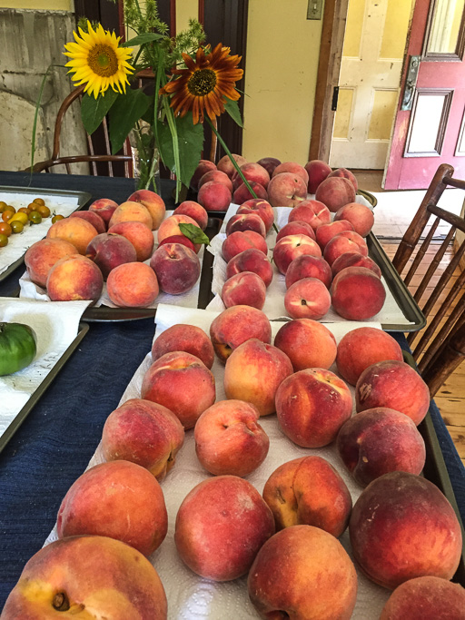 Phoro of just harvested peaches on dining room table