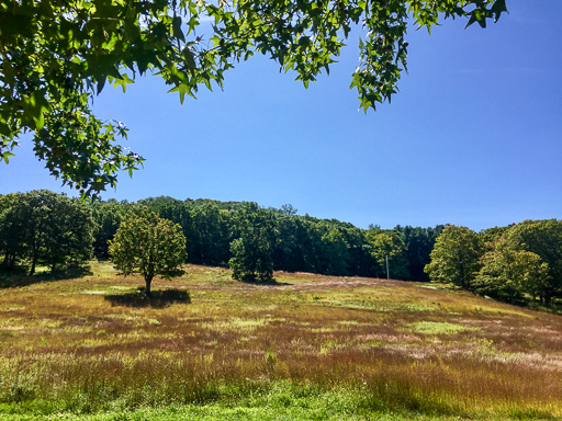 Photo of a meadow in the early fall; tall grasses ringed by orange-tinged trees