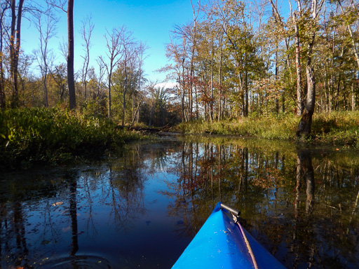 Photo of the Great Swamp in autumn taken from a kayak