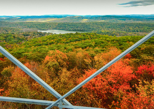 Photo of the autumn woods from part way up the Mount Nimham fire tower